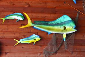Fish (Stuffed) on Wall_106475858