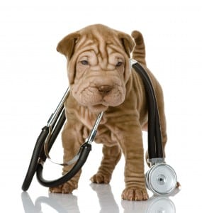 Dog_Stethoscope_119242852
