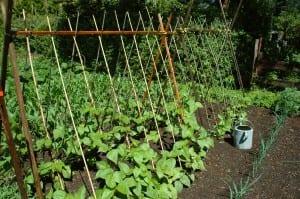 Organic_Garden_1499577